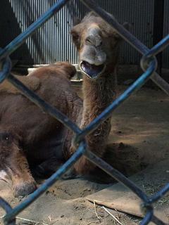 野毛山動物園のツガルさん